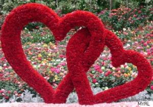 Hearts - Sentosa Flowers 2008